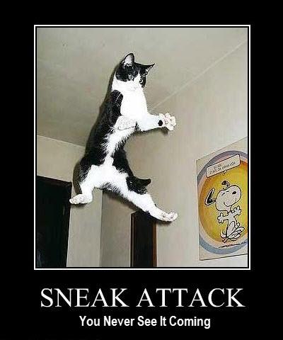 Big Cat Sneak Attack